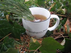 Хвойный чай - полезные свойства