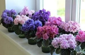 Неприхотливые цветы в квартире