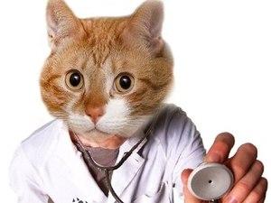 Норма температуры у домашней кошки
