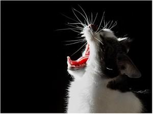 Бессонница у старого кота