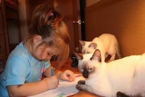 Особенности характера сиамских кошек