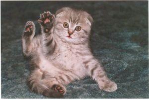 Какие есть кличики для кошек