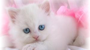 Выбор красивого именя для кошки