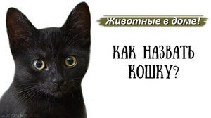 Как придумать кличку кошке