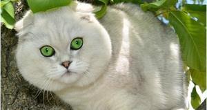 Как подобрать клички для кошек