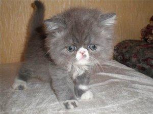 Имена для кошек