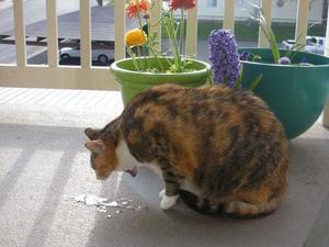 Почему кошку рвет