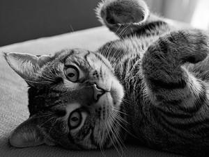 Домашний кот в квартире