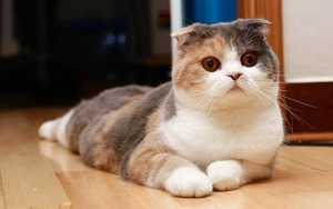 Здоровый рацион питания кошки