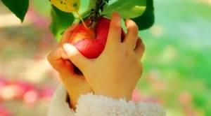 Срывать яблоки во сне