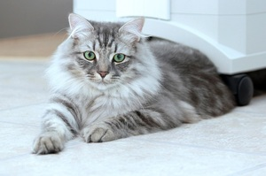 Породы кошек и котов