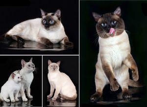 Выбрать кошку