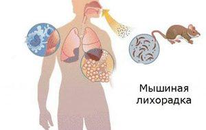 Как лечить мышиная лихорадку