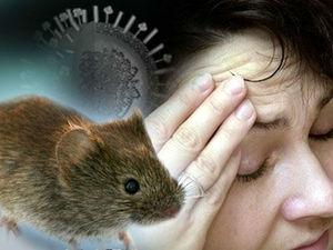 Как проявляется мышиная лихорадка