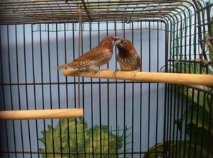 Как правильно выбрать клетку для птиц